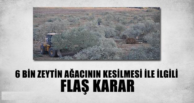 6 Bin Zeytin Ağacının Kesilmesi İle İlgili Flaş Karar !