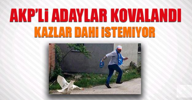 AKP'li Adaylar Kovalandı
