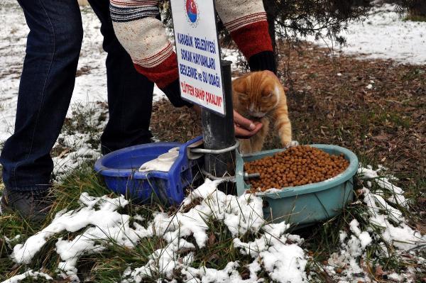 Karabük'te Sokak Hayvanlarına Yem