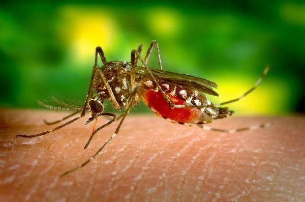 Burundi Declares Malaria Epidemic As Death Toll Rises