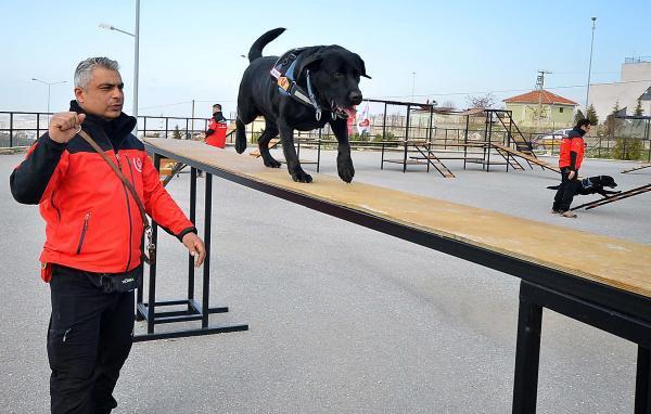 Hayat Kurtaran Köpekler Böyle Eğitiliyor