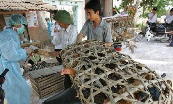 Fao: Çin'deki Kuş Gribi Salgınının Kontrol Altına Alınması Gerekiyor