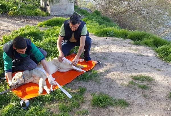 Askerlerin Sınırda Bulduğu Yaralı Köpek Tedaviye Alındı