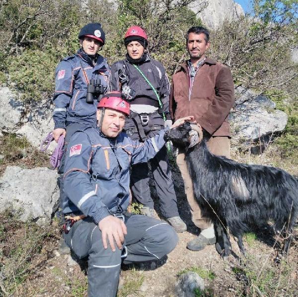 Kayalıkta Mahsur Kalan Keçiyi AFAD Kurtardı