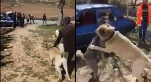 Köpek Dövüştürenlere 5 Bin 500 Lira Ceza Yazıldı