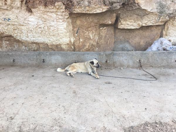 Köpek İçin Silahlı Kavga: 2 Ölü, 5 Yaralı