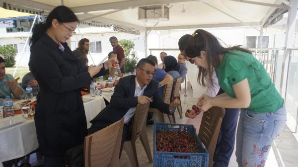Türk Kirazı Çin Pazarında