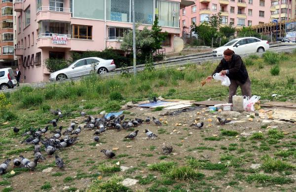 85 Yaşında, Yüzlerce Güvercin Besliyor