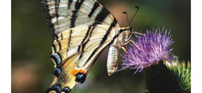 Mersin'in Kelebekleri Kitaplaştı