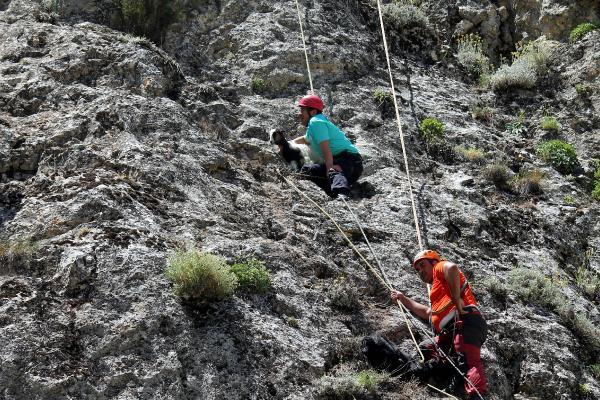 Kayalıkta Mahsur Kalan Keçileri AFAD Kurtardı