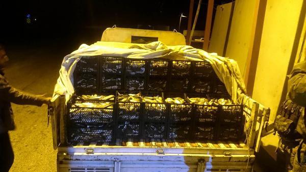 Ahlat'ta Kaçak Avlanan 1,5 Ton İnci Kefalı Ele Geçirildi