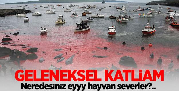 Deniz suyu kıpkırmızı! Balıkçıların korkunç katliamı