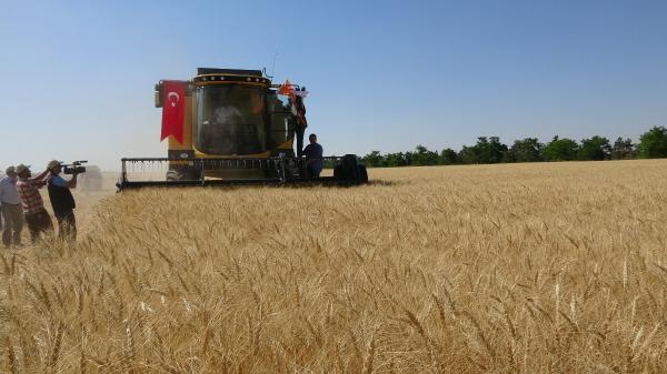 Buğday Fiyatlarını Nihayet Açıklandı
