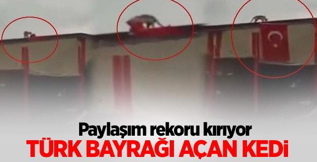 Türk Bayrağı açan kedi görenleri şaşırttı