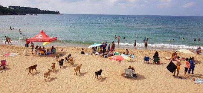Köpekler Plaja İndi