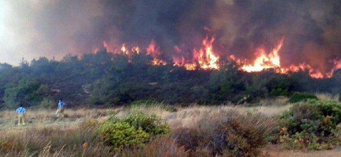 Ayvalık'taki Yangında 5 Hektar Çam Ve Zeytinlik Zarar Gördü