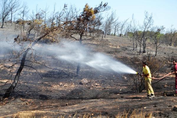 Ayvalık'ta Aynı Bölgede İki Gün Sonra Yine Yangın Çıktı