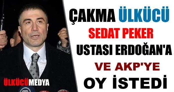 Çakma Ülkücü Sedat Peker Ustası Erdoğan'a Oy İstedi