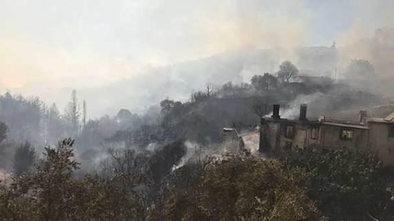 Muğla'da Orman Yangını Zeytinköyü yaktı kül etti.