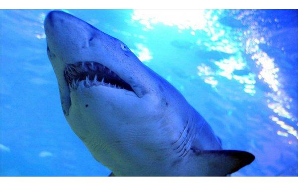 Peşine Düşen Köpekbalığından 3 Saat Yüzerek Kurtuldu