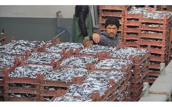 Doğu Karadenizli Balıkçılar Ümidini Hamsiye Bağladı