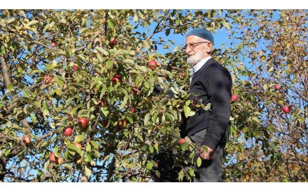 Misket Elması Kaybolmasın Diye Ücretsiz Fidan Dağıtıyor