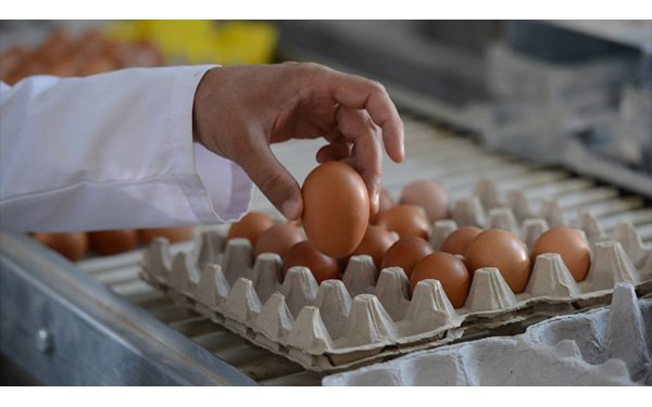"""Yumurtada """"Organik-Köy Yumurtası"""" Hilesi Bitecek"""