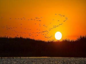 Koruma Altındaki 'Kuş Cenneti' Dört Mevsim Misafirlerini Ağırlıyor