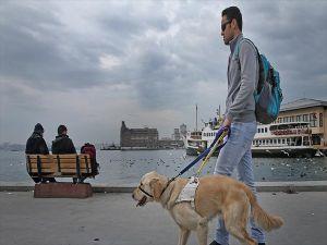 Rehber Köpeği Aslan Hem Ev Hem Yol Arkadaşı