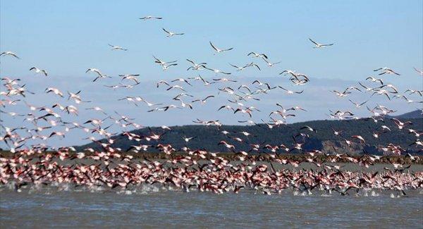 Gala Gölü Göçmen Misafirleriyle Bir Başka Güzel
