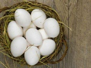 Yumurta, Anne Sütünden Sonra En Önemli Protein
