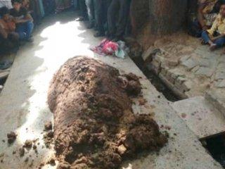 Doktora götürmek yerine inek dışkısına gömdüler!