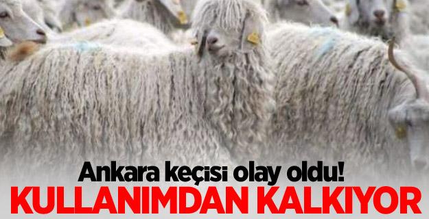 Ankara keçisi olay oldu!
