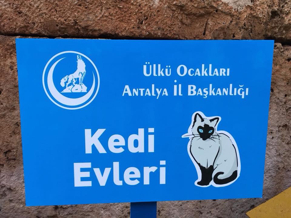 Ülkü Ocakları Antalya İl Başkanlığı '' Kedi evi projesine imza attı''
