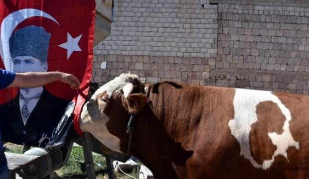 Ay - Yıldızlı boğa Erdoğan'a hediye edilecek