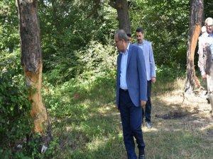Çam Ağaçlarına Zarar Verilmesine İlişkin Valilik Açıklaması