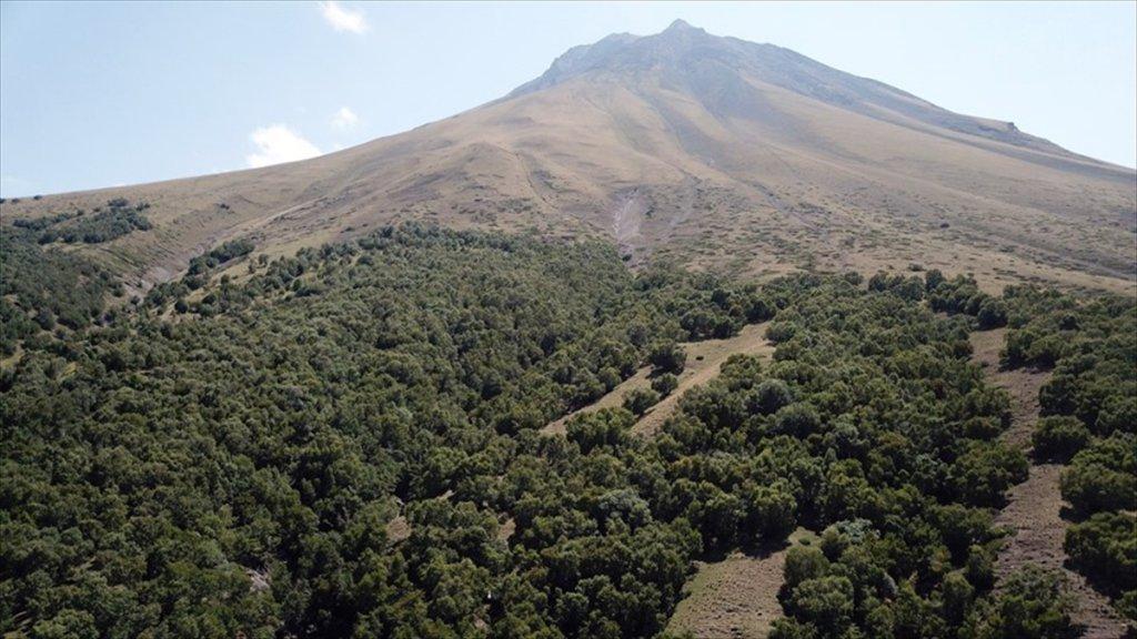 Ağrı Dağı'nın 'Huş' Ormanı