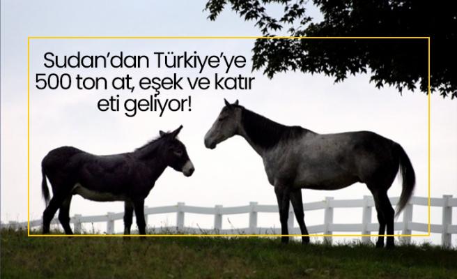Sudan'dan Türkiye'ye 500 ton at, eşek ve katır eti geliyor!