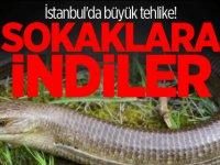 İstanbul'da büyük tehlike! Sokaklara indiler...