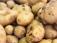 Sandıklar kapandı! Patates fiyatları düşüşe geçti