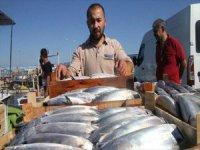 Balıkçıların Yüzü Gülüyor, Palamut Bolluğu Yaşanıyor