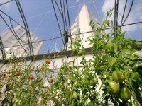 Çatıda 'Kentsel Tarıma' İlgi Artıyor
