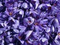 'Mucize Bitki'nin Kilosu 30 Bin Liradan Satılıyor