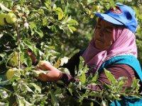 Erzincan'dan Fransa ve İspanya'ya Bebekler İçin Meyve Püresi İhracı
