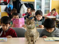 Kedi 'Tarçın' Okulun 257'nci Öğrencisi Oldu