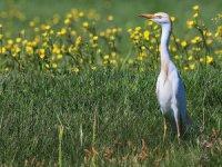 Van Gölü Havzası'nda Koruma Çalışmalarıyla Kuş Türü Sayısı Arttı