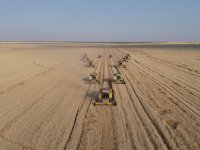 Ceylanpınar TİGEM'in Kaliteli Buğdayına Yurt Dışı İlgisi
