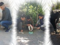 Bor Ülkü Ocakları Sokak Hayvanlarını Unutmadı