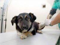 Ankara'da hayvanlara müdahale için ilk yardım eğitimi verilecek