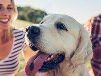 Evcil Dostlarınız İçin En İyisi